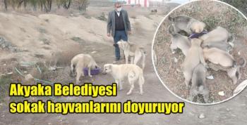 Akyaka Belediyesi sokak hayvanlarını doyuruyor