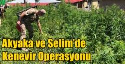 Akyaka ve Selim'de Kenevir Operasyonu