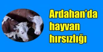 Ardahan'da hayvan hırsızlığı