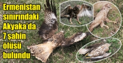 Ermenistan sınırındaki Akyaka'da 7 şahin ölüsü bulundu