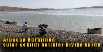 Ermenistan sınırındaki Arpaçay Barajında sular çekildi balıklar kıyıya vurdu