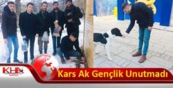 Kars Ak Gençlik Sokak Hayvanlarını Unutmadı