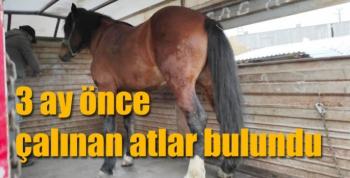 Kars Jandarması 3 ay önce çalınan atları buldu