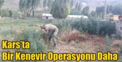 Kars'ta Bir Kenevir Operasyonu Daha