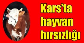 Kars'ta hayvan hırsızlığı