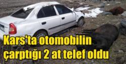 Kars'ta otomobilin çarptığı 2 at telef oldu