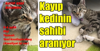 Kayıp kedinin sahibi aranıyor
