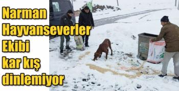 Narman Hayvanseverler Ekibi kar kış dinlemiyor