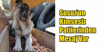Susuz'un Kimsesiz Patilerinden Mesaj Var