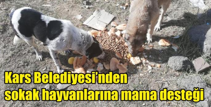 Kars Belediyesi'nden Sokak hayvanlarına mama desteği