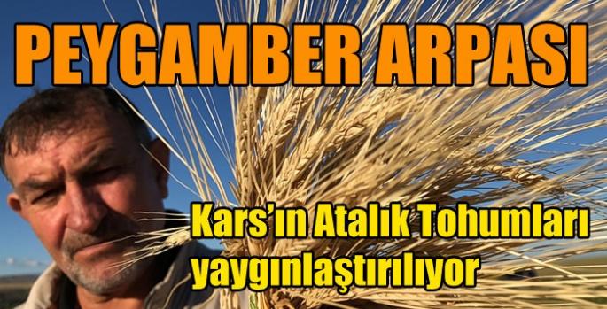 Kars'ın Atalık Tohumları yaygınlaştırılıyor