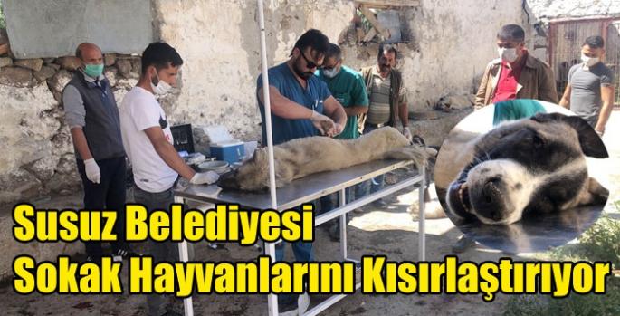 Susuz Belediyesi Sokak Hayvanlarını Kısırlaştırıyor